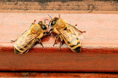 Het consult - honingbijen